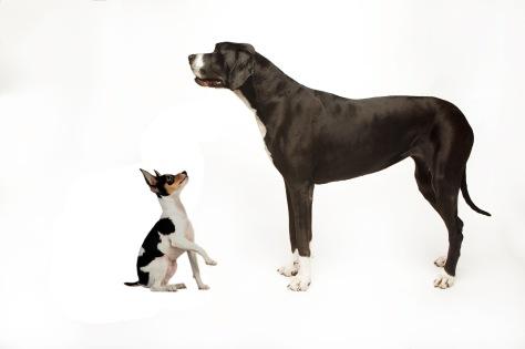 big little dog