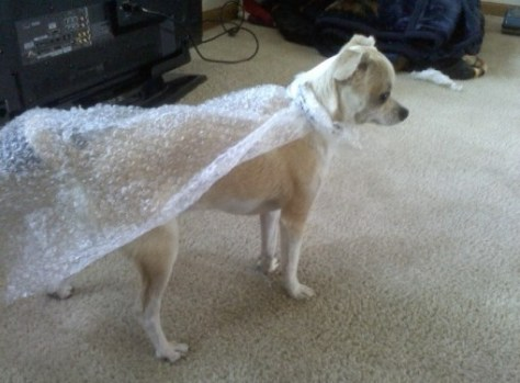 bubble wrap dog cape