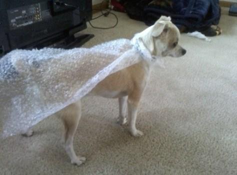 bubble wrap dog cape